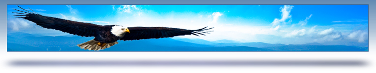 careers graphic header - soaring bald eagle